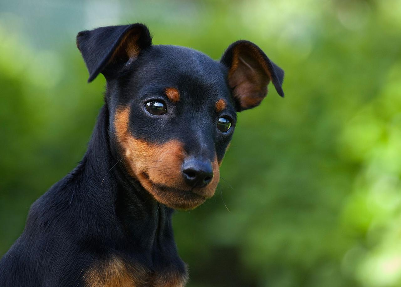 صورة صور كلب، افضل صديق للانسان ولا يغدر به مهما طال العمر