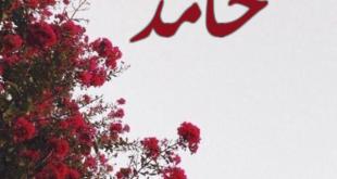 صورة سمي ابنك اسم يدل علي الحمد، معنى اسم حامد