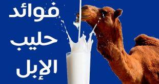 فوائد حليب الناقة , التأثير الايجابي لحليب الناقة