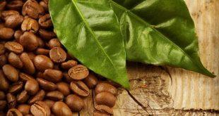 صورة تعرف علي اضرار وفوائد القهوة الخضراء , اضرار القهوة الخضراء