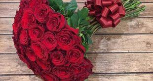 صورة صوره ورده جميله, اجمل صور الورد المعبرة عن الحب
