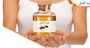 صورة فوائد زيت النمل، زيت النمل وفوائده لتخفيف نمو الشعر